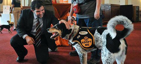"dog wearing ""Adopt me"" vest"