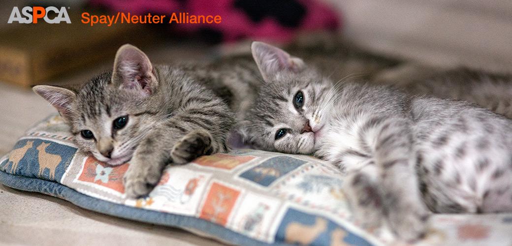 a kitten resting on a pillow