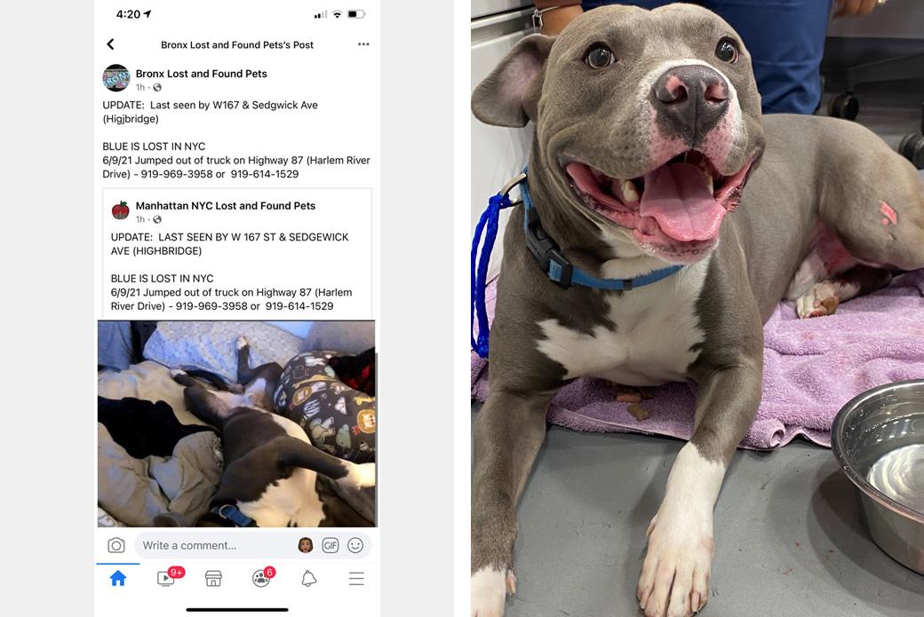 Blue's postings on Facebook