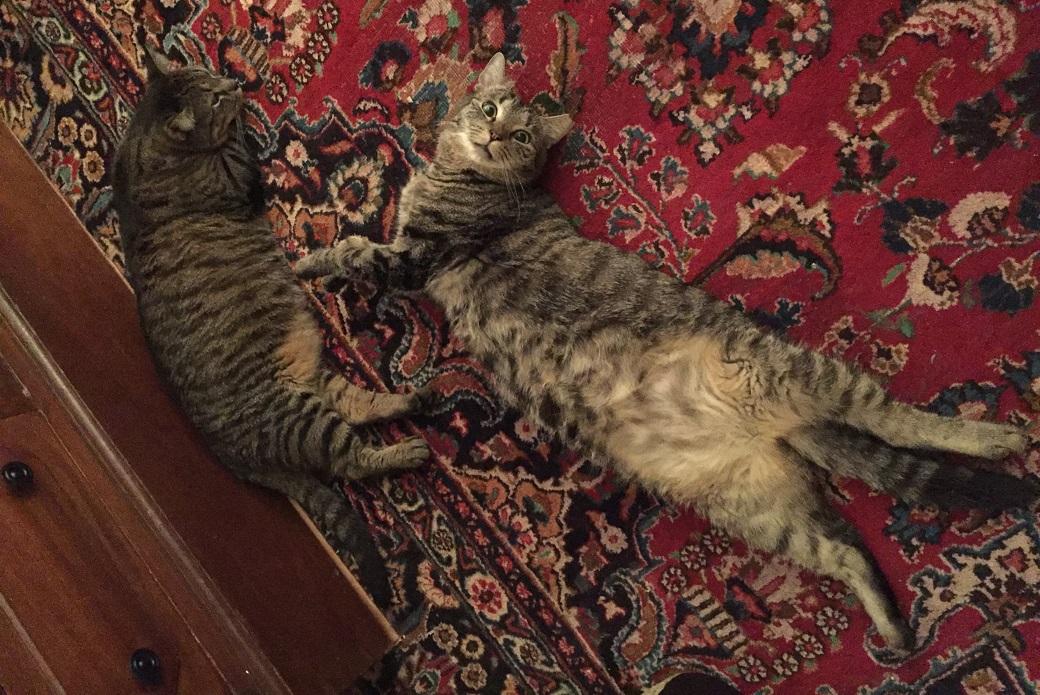 Lola and Lyla resting