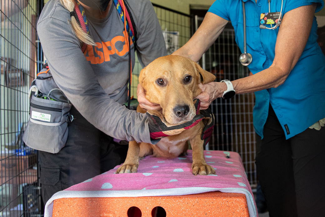 rescued dog getting a medical examination