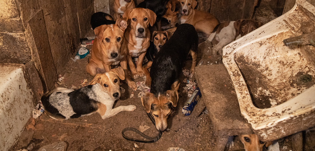 ASPCA Assists with Rescue of Neglected Dogs in Southeast Missouri