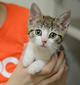 ASPCA staffer holding kitten