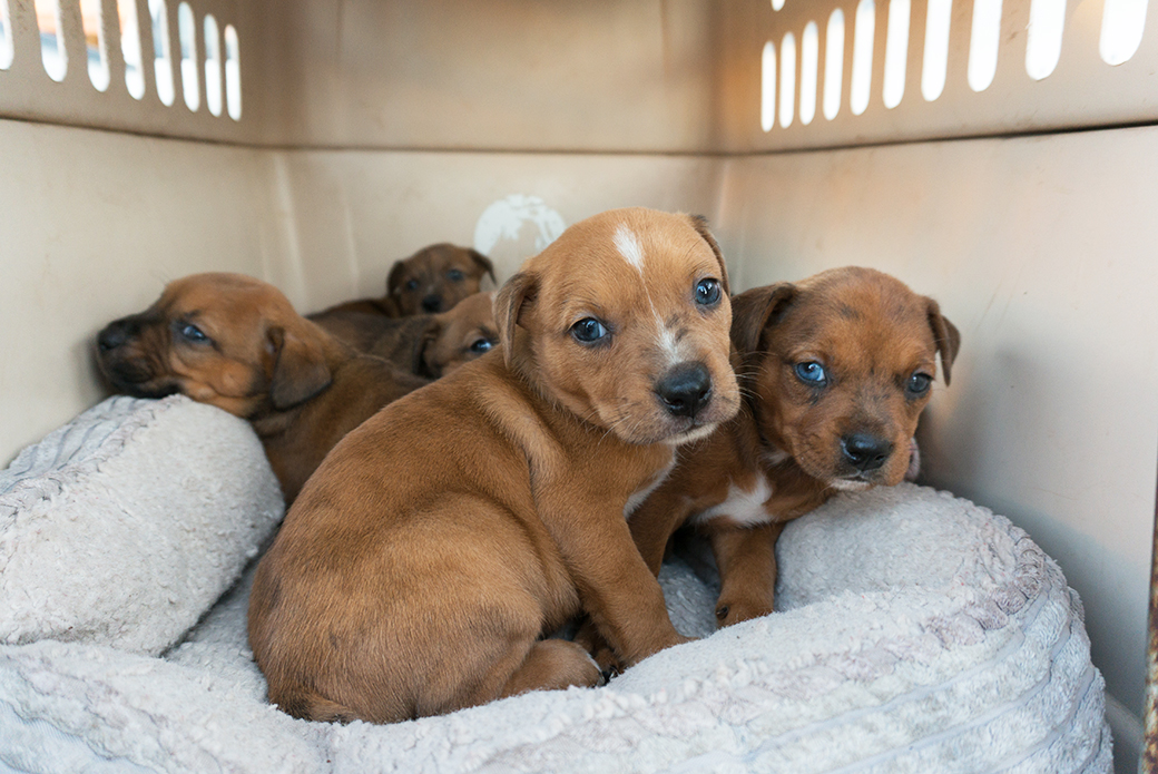 rescued puppies