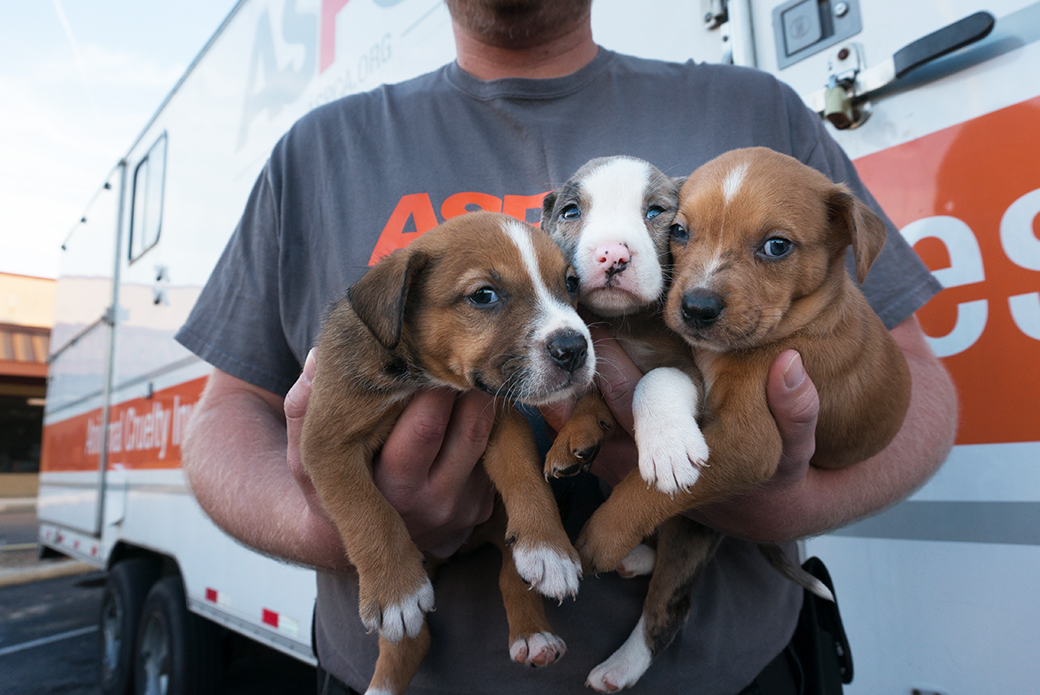 Volunteer with rescued puppies