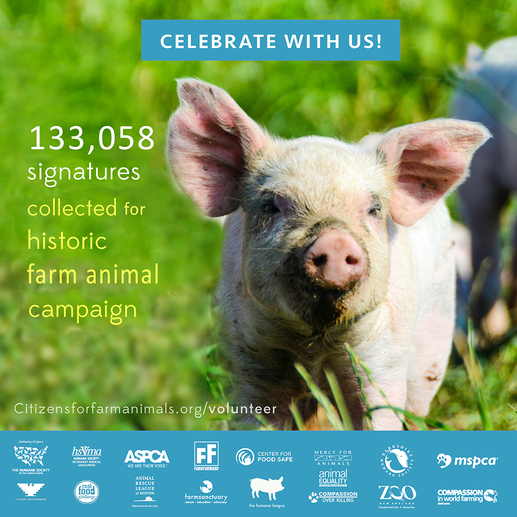 Massachusetts Farm Animal Ballot Campaign Makes History