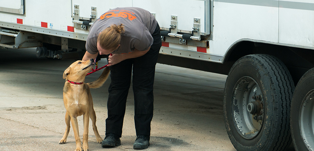 Animals Displaced by Harvey Set to Arrive at NYC ASPCA