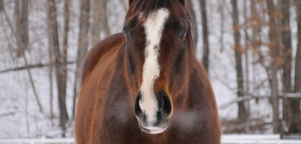 My Right Horse