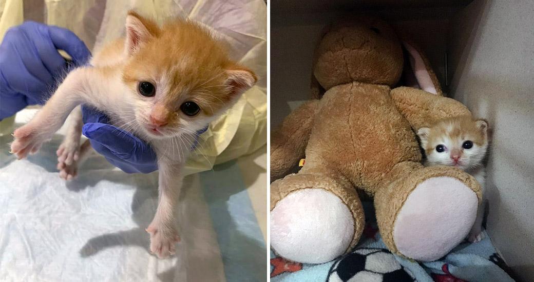Bonny as a kitten