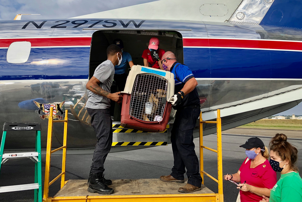 2 people loading rescued animals onto plane