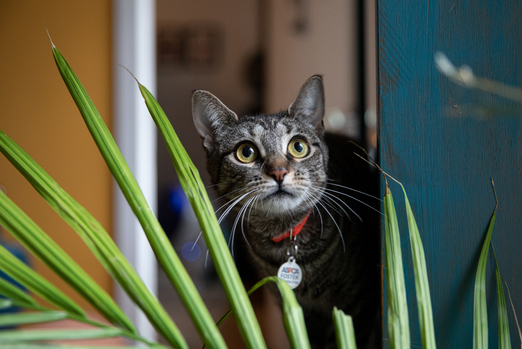 Cat looking through grass
