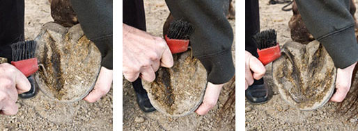 cleaning hoof demo