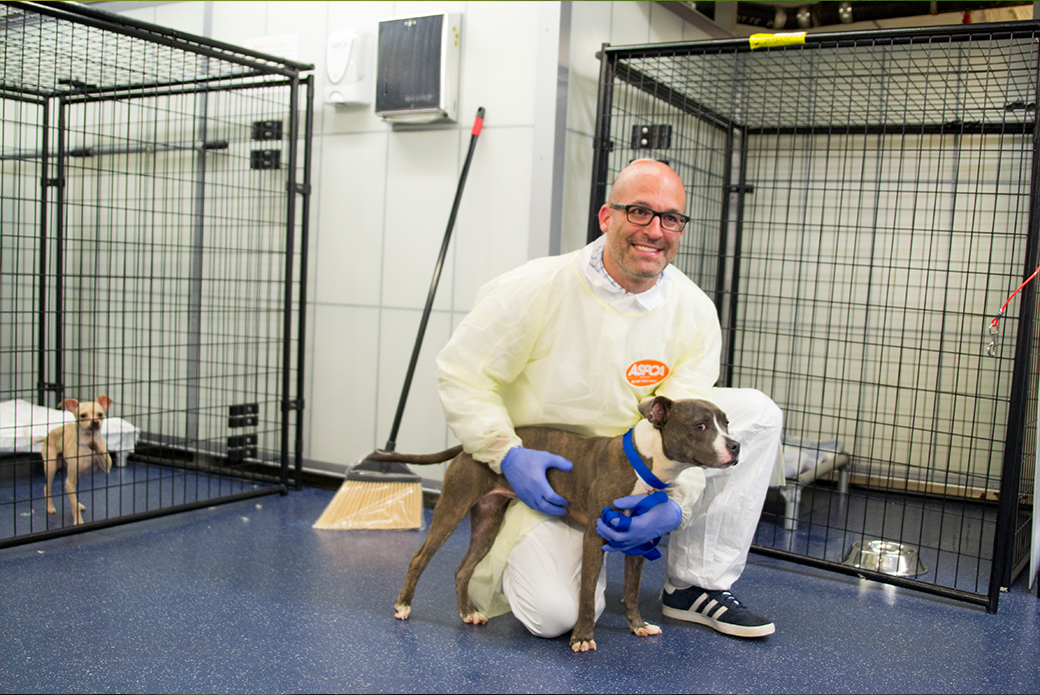 ASPCA President & CEO, Matt Bershadker spend some time with the new arrivals.
