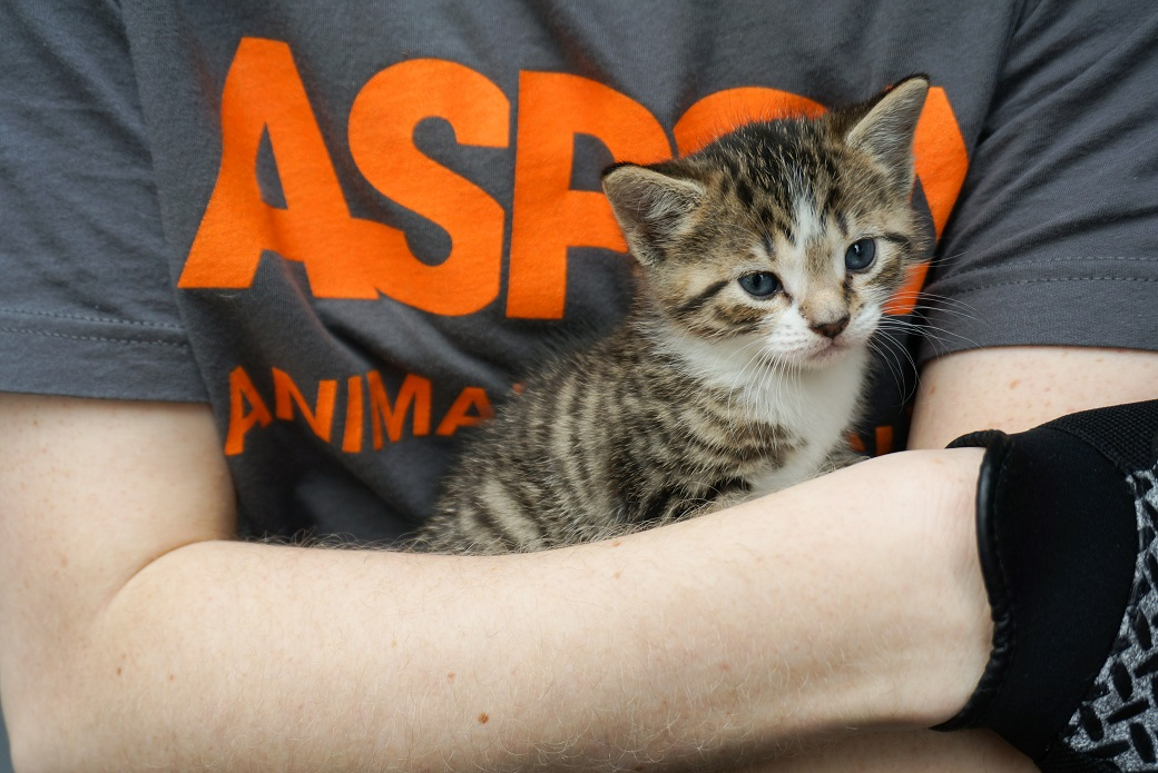 aspca volunteer holding a kitten