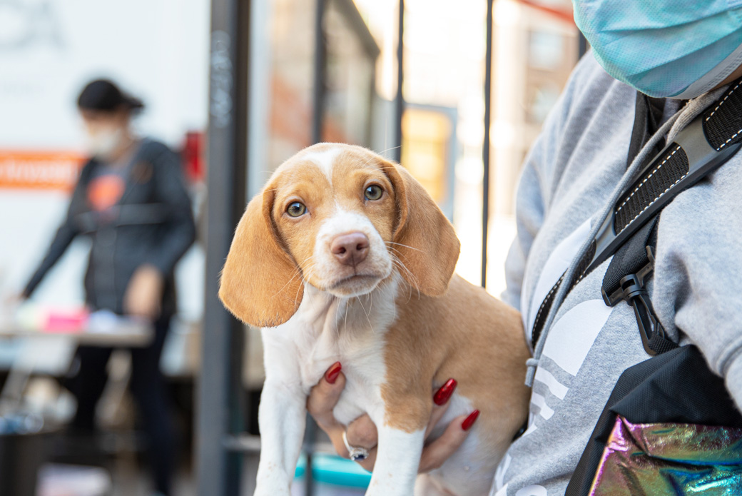 puppy at veterinary wellness event