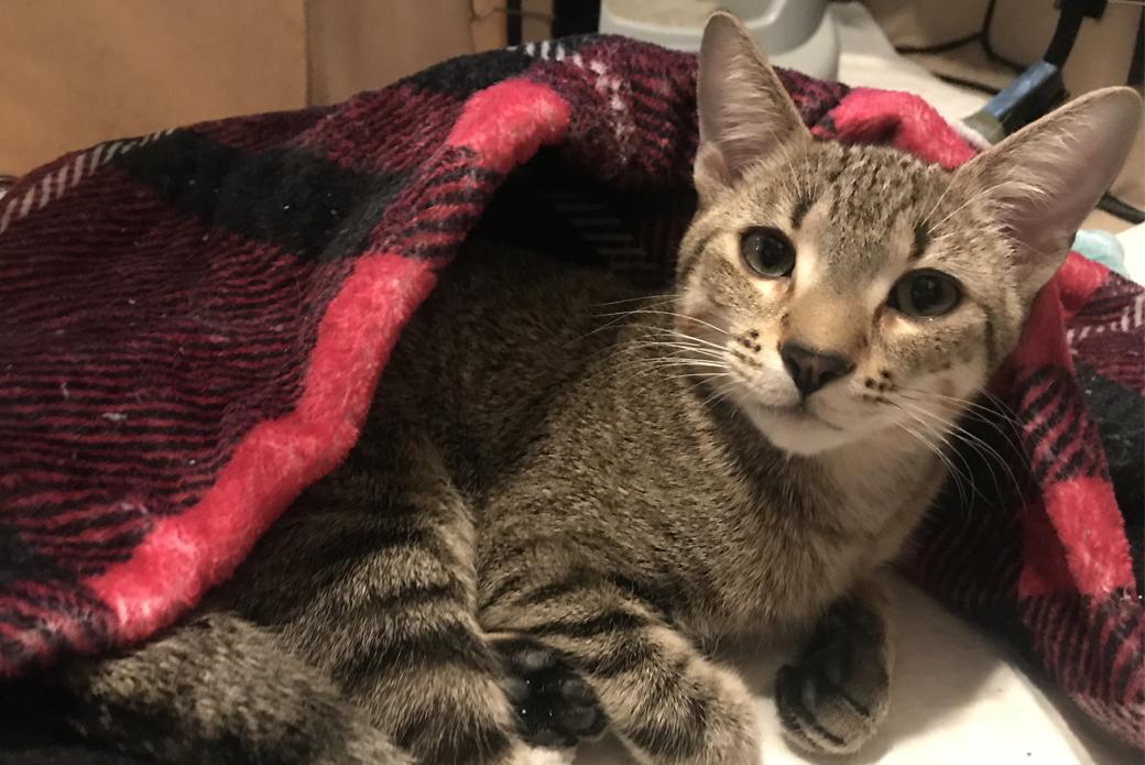 Lewis cuddling under a blanket