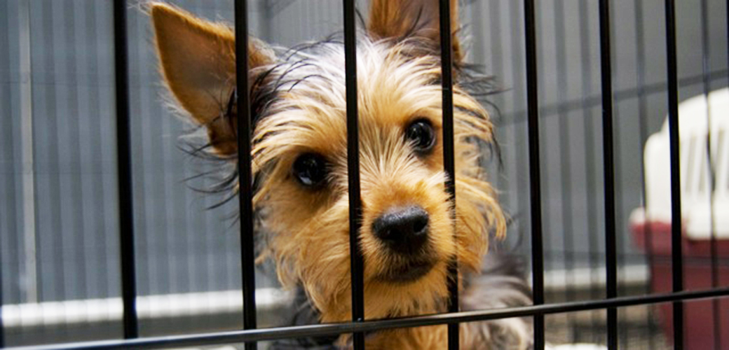 3.6 Million New Yorkers Lack Municipal Animal Shelter Services