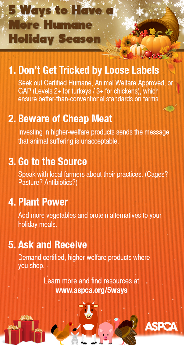 5 Ways to Have a More Humane Holiday Season!