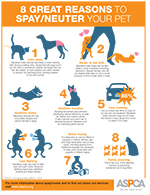 reasons to spay/neuter