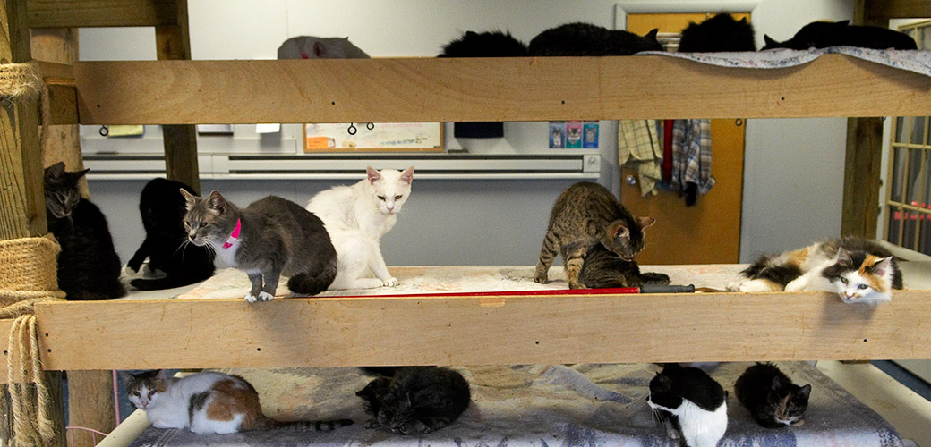 A Closer Look At Animal Hoarding Help Victims ASPCA - Take look inside one amazing cat sanctuaries world