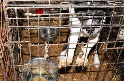 a closer look at puppy mills aspca