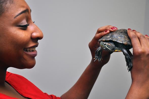 ASPCA staff responder holding a turtle