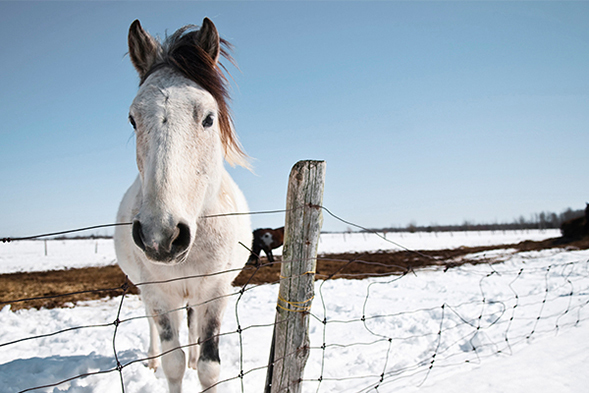 Abandoned Animals Brace for Winter