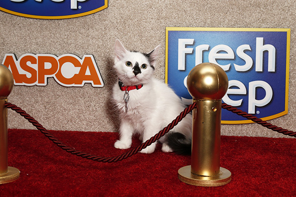 White cat on the red carpet