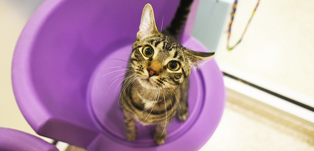 find a shelter adopt or foster an animal in your