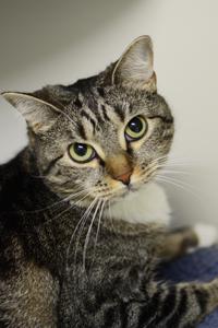ASPCA Adoptable Cat Alicia