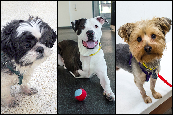 Famous Pups: ASPCA Adoptable Dogs Shine on the Today Show