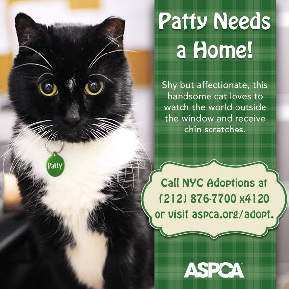 Adoption Spotlight: Patty