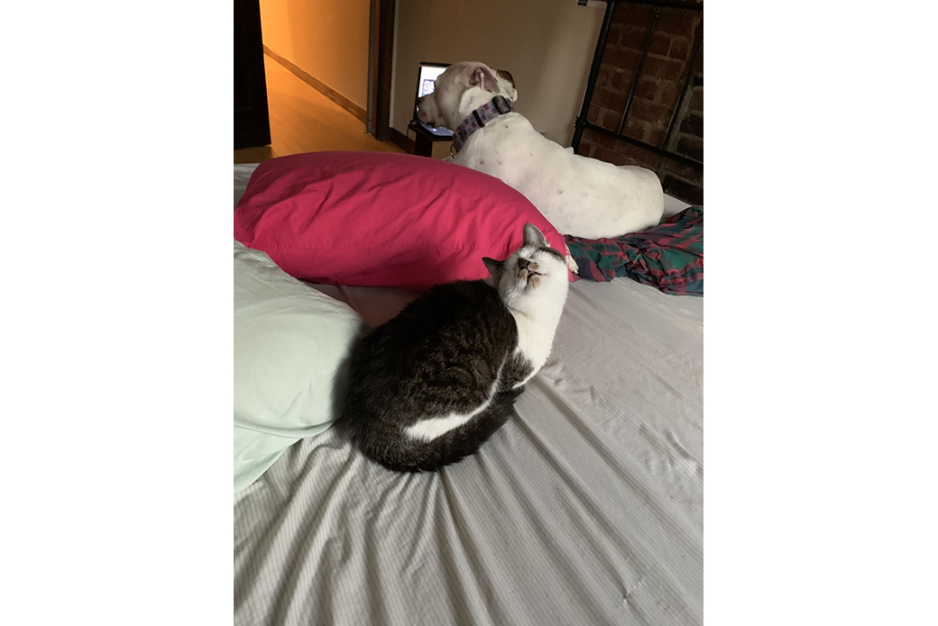 Dubby on a bed with her foster sibling