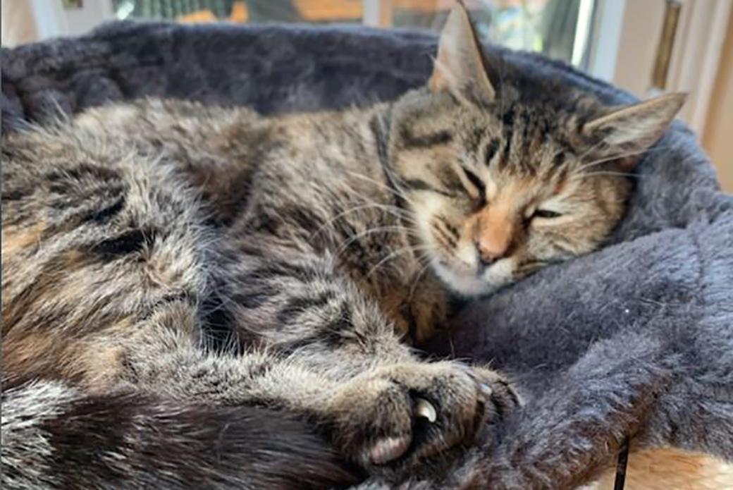 Marzipan sleeping