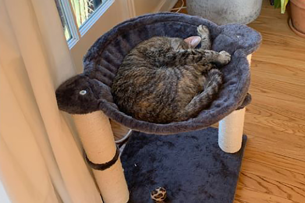Marzipan sleeping curled up