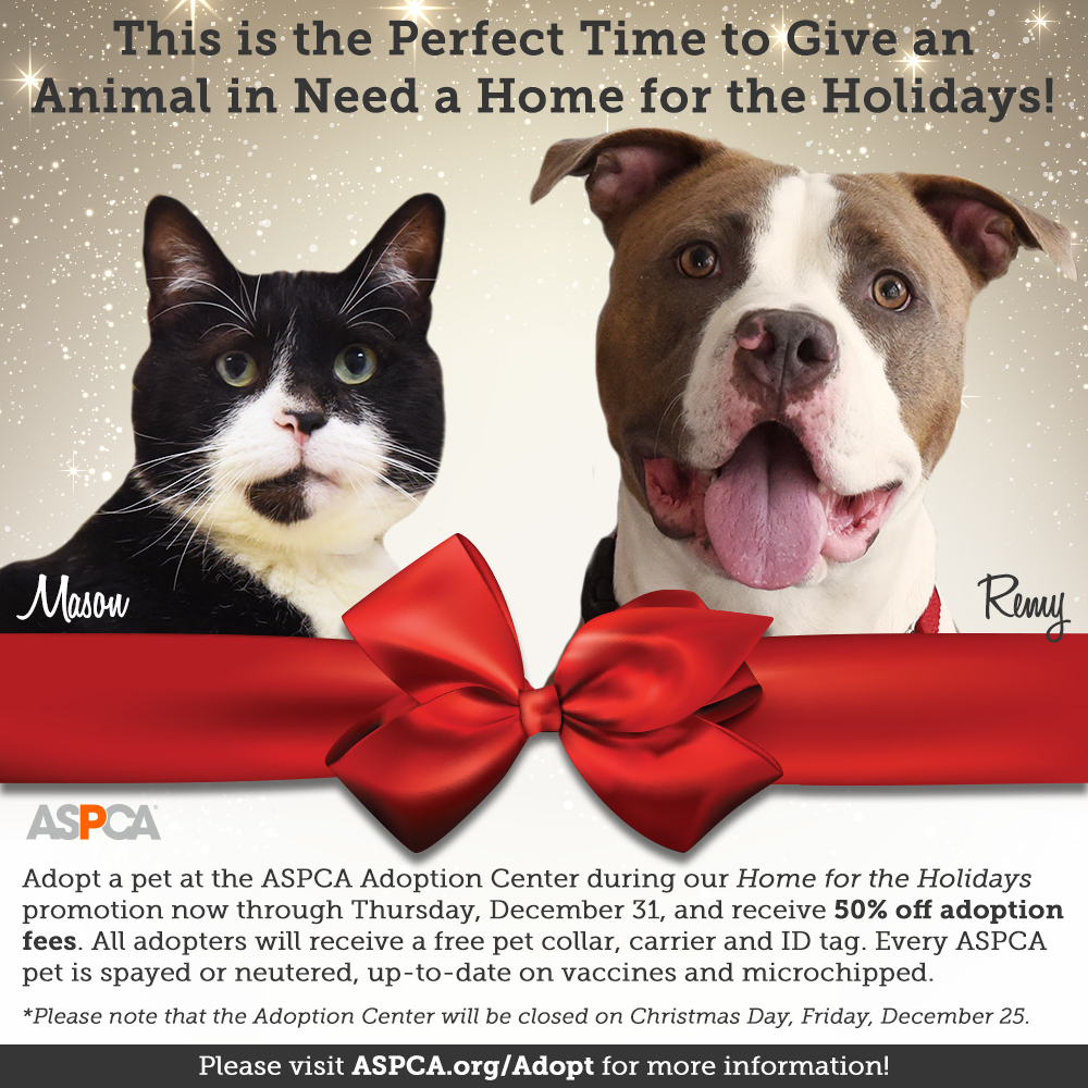 This is Your Chance to Give an Animal in Need a Home for the Holidays! Don't Miss Adoption Specials at the ASPCA