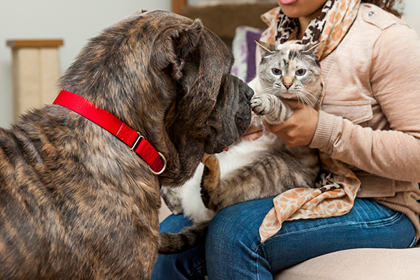 Dash with a cat at his foster home