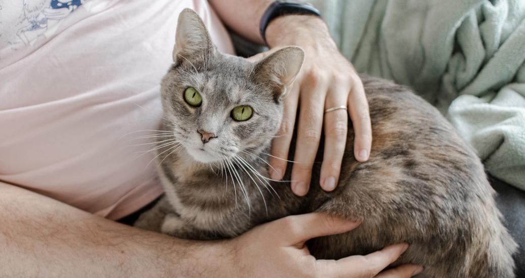 Cat being cradled