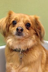 Juniper, ASPCA Behavioral Rehabilitation Center graduate