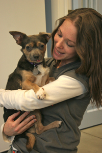 Waffle, ASPCA Behavioral Rehabilitation Center graduate