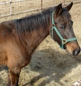 ASPCA Rescued Horse