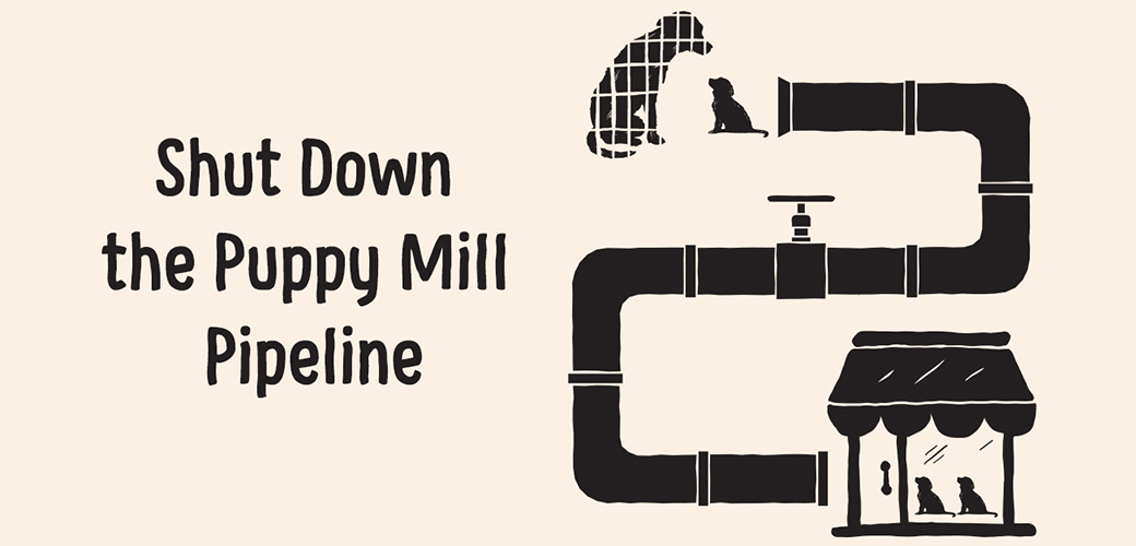 Shut down the puppy mill pipeline