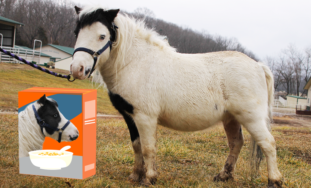 Can You Guess This Horse's Neigh-m?