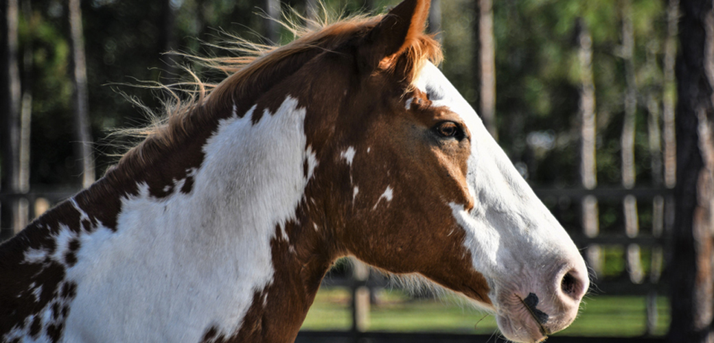 Stomp Your Hooves, It's Adopt a Horse Month!