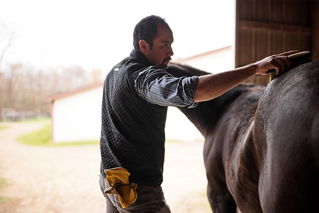 Horse being groomed