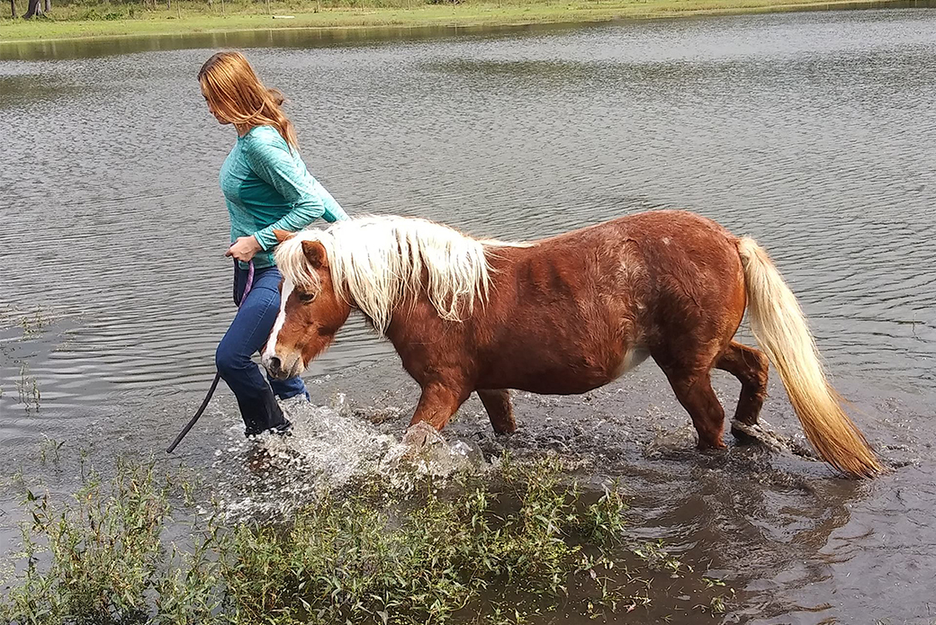 Horse in a lake