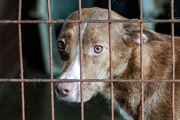 Animal Shelter In Mobile Al : Update aspca assists authorities in removal of