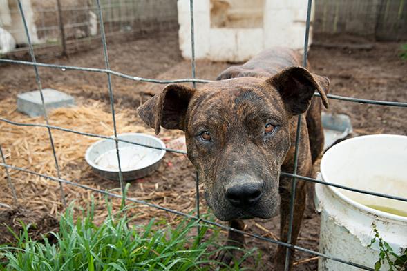Alabama Pet Parent Reunited with Missing Dog After Seeing Facebook Post