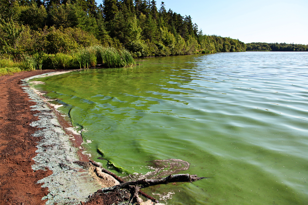 Algae in lake