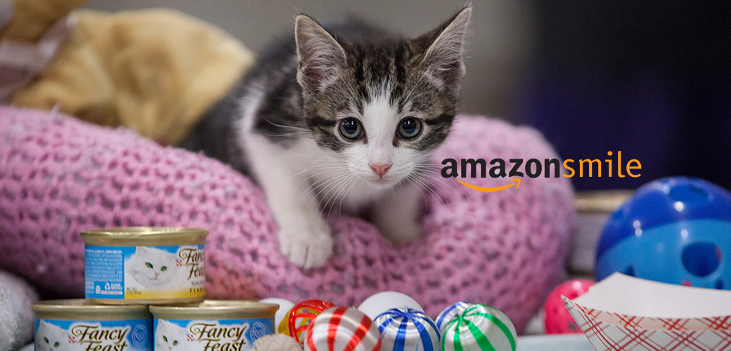 Kitten on a pink cushion with catfood and the amazon smile logo